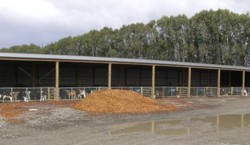 calf_shed